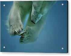 Icebaer Acrylic Print