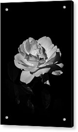 Iceberg Rose Acrylic Print by Charles Lupica