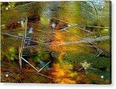 Iced Fall Acrylic Print