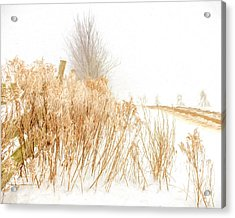 Iced Goldenrod At Fields Edge - Artistic Acrylic Print