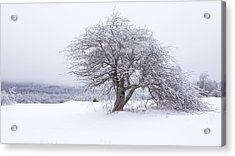 Iced Over Acrylic Print by Patrick Downey