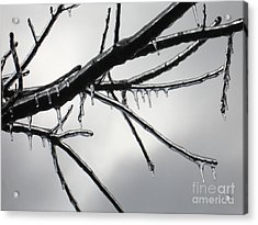 Acrylic Print featuring the photograph Iced Tree by Ann Horn