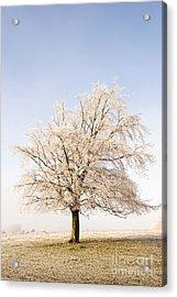 Iced Tree Acrylic Print by Anne Gilbert