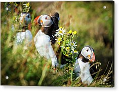 Iceland, Fauna & Flora Acrylic Print by Mikel Bilbao