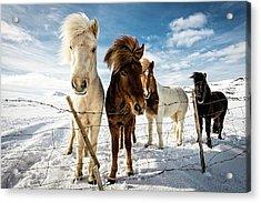 Icelandic Hair Style Acrylic Print