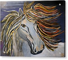 Icelandic Horse Acrylic Print by Becki Nation