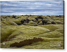Icelandic Moss Acrylic Print by Miso Jovicic