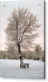Icetree Acrylic Print