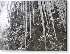 Icicle Dreams Acrylic Print