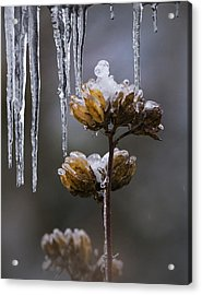 Icicles And Ice Flowers Acrylic Print