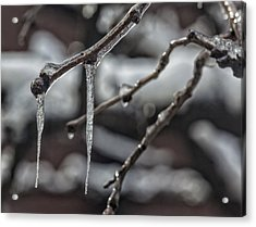 Icicles On Branch Acrylic Print