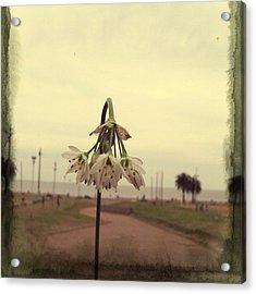 #icnolimits  @olloclip @instacanvas Acrylic Print