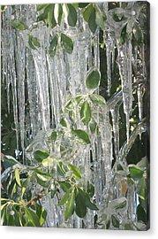 Icy Green Acrylic Print