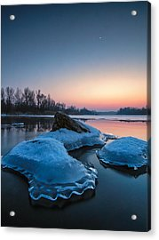 Icy Jellyfish Acrylic Print by Davorin Mance