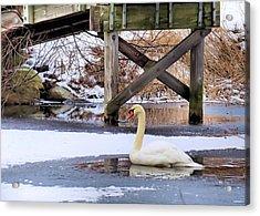 Icy Pond Acrylic Print by Janice Drew