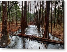 Icy River In The Bottomland Forest Acrylic Print by Maurice Smith