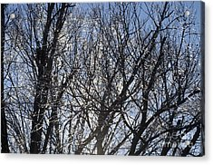 Icy Trees  Acrylic Print by Luther   Fine Art