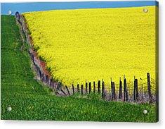 Idaho, Grangeville, Canola Field Acrylic Print