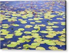 Idyllic Pond Acrylic Print by Joana Kruse