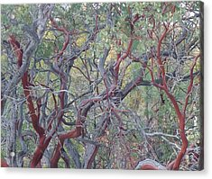 Acrylic Print featuring the photograph Idyllwild Red Tree by Nora Boghossian