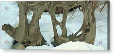 Acrylic Print featuring the photograph Idyllwild Tree Sculpture by Nora Boghossian