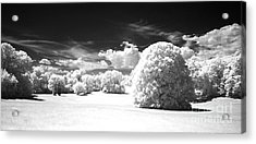 If  1 Acrylic Print by Alan Russo