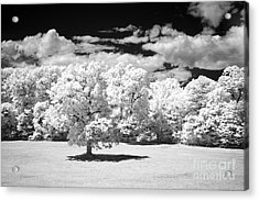 If  2 Acrylic Print by Alan Russo