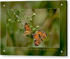 If I Take The Wings Of The Morning Acrylic Print by Denise Beverly