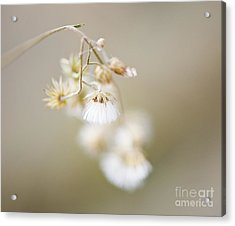 If Only I Am ..... Acrylic Print