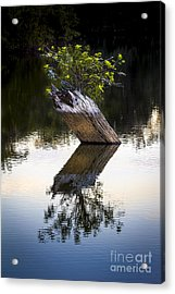 If There Is A Will There Is A Way Acrylic Print by Marvin Spates