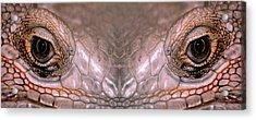 Iguana Eyes Acrylic Print