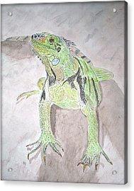 Iguana Acrylic Print