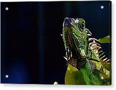 Acrylic Print featuring the photograph Iguana On Black by Pamela Blizzard
