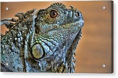 Iguana Acrylic Print by Robert Knight