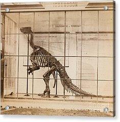 Iguanodon Skeleton Mesozoic Dinosaur Acrylic Print by Science Source
