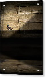 Il Piccolo Guardiano Acrylic Print by Bob Orsillo