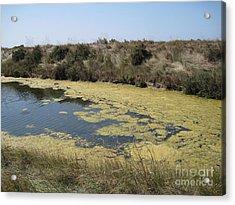 Ile De Re - Marshes Acrylic Print