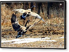 I'll Be Your Wing Man Acrylic Print by Sheila Werth