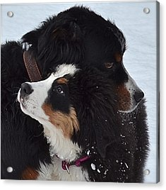 I'll Keep You Warm Acrylic Print by Barbara Dudley