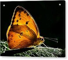 Illuminated Butterfly Acrylic Print