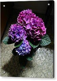 Illuminated Hydrangea Acrylic Print