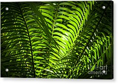 Illuminated Jungle Fern Acrylic Print