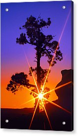 Illuminated Needles  Acrylic Print by Bijan Pirnia