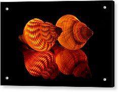 Illuminated Shells Acrylic Print