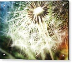 Illuminated Wishes Acrylic Print by Marianna Mills