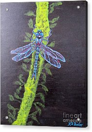Illumination Of A Blue Dragonfly's Form At Nightfall Painting Acrylic Print by Kimberlee Baxter