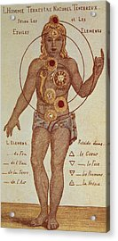 Illustration From Theosophica Practica, Showing The Seven Chakras, 19th Century Acrylic Print by Indian School
