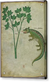 Illustration Of A Plant And A Crocodile Acrylic Print