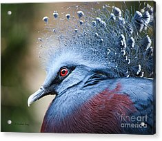 Acrylic Print featuring the photograph Illustrious by Heather King