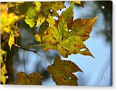 Ilovefall Acrylic Print by JAMART Photography